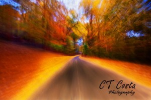 Lovely Road Photgraph