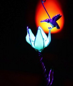 Tiny Hummingbird standing on flower that Glows in the Dark by Papillon9