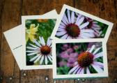 Aster Garden Stationery Note Cards Set of 3