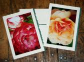 Perfect Roses Stationery Note Cards Set of 5