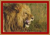 Lion Head Cross Stitch Pattern