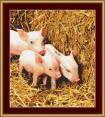 Piglets Cross Stitch Pattern