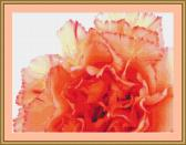 Orange Carnation Cross Stitch Pattern