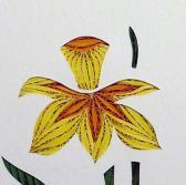 Quilled Daffodil framed wall art