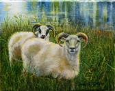 farmers husband sheep