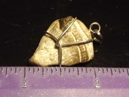 Wire Wrapped Fossil Pendant