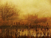 We tried, but we don't belong, golden misty morning scene 5x7 fine art photography print