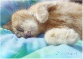 Sleepy paws, orange cat fast asleep 5x7 fine art photography print