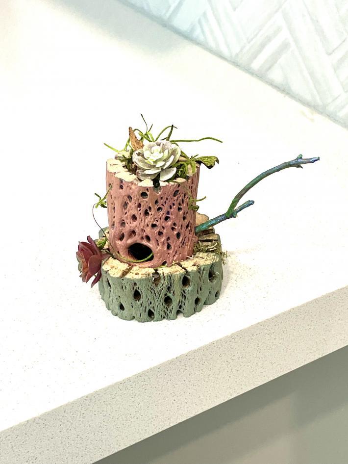 Cholla Cactus Planter