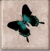 Gorgeous Blue Butterfly Adorns This 4 in x 4 in Ceramic Tile Coaster Wall Art Paperweight