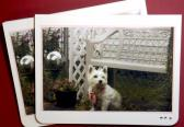 6 cards with a West Highland White terrier in a garden
