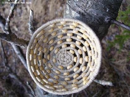 Alaska Basket Custom Coiled Bird's Nest