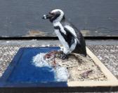 Penguin on surf sculpture
