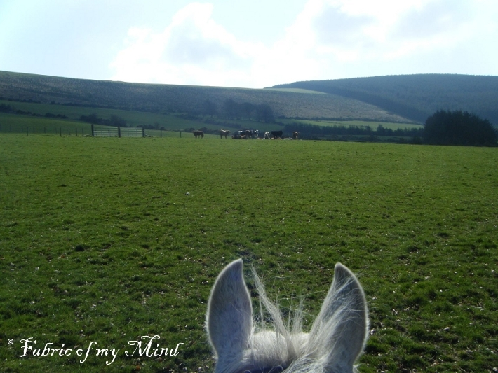 Wicklow from a Horse