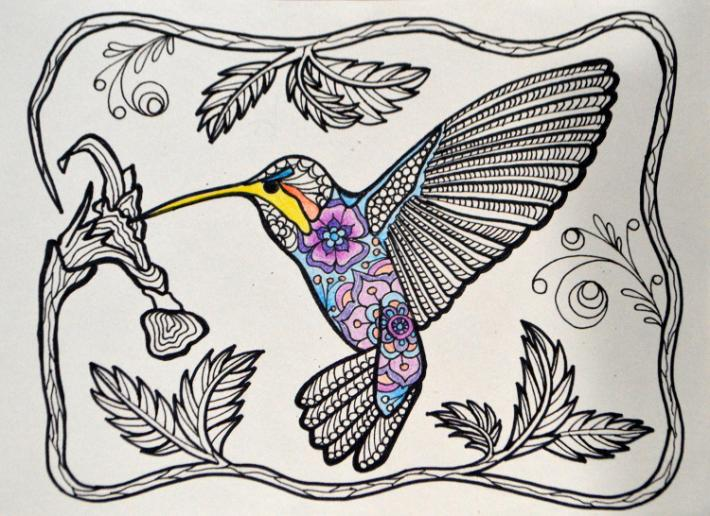 Pollinator Series Hummingbird Adult Coloring Page Instant Download