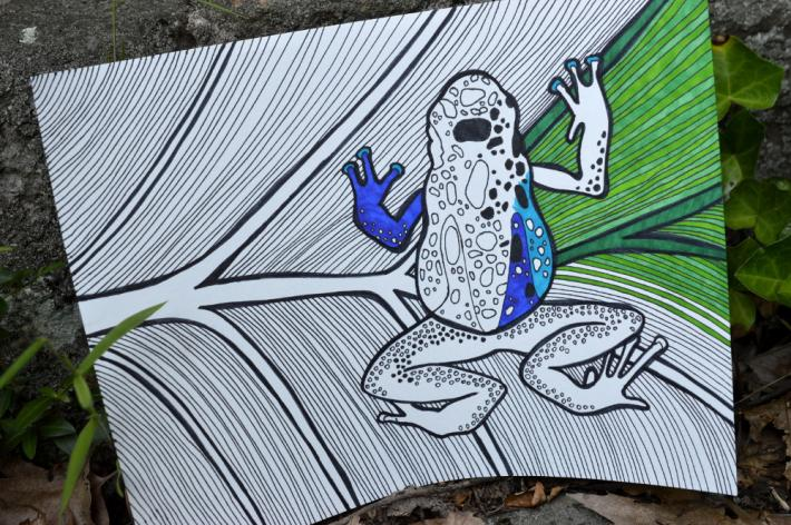 Poison Dart Frog Adult Coloring Page Instant Download