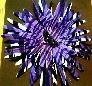 black heel flower bow