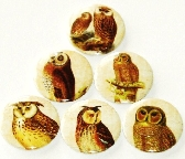 Fridge magnets set of 6 Majestic Owls  fm 56