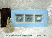 beach seashell collection shadowbox
