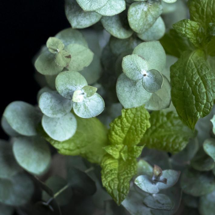 New COCONUT Soy Wax 36 Peppermint and Eucalyptus Vegan Tea Light