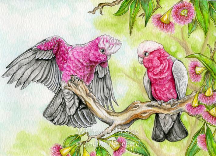 Pink and Grey galahs cockatoo painting bird art large print