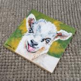 The Kid Baby Goat on Flat Birch Canvas