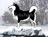Alaskan Malamute Dog black and white Portrait 4x6 Matted Print