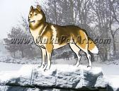 Siberian Husky Dog sable Portrait 4x6 Matted Print