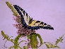Butterfly Heaven Original Watercolor by Michael Joe Moore