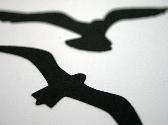 Seagull Set Scrapbook Diecuts