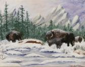 Winter Buffalo