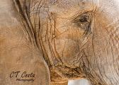 Elephant Print animal photography elephant wall decor 5x7 inch