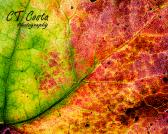 Leaf Abstract Print nature photography autumn colors wall art 8x10 inches